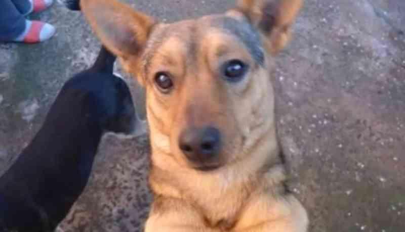 Cachorro morre durante queima de fogos em Londrina, PR; 'acho que ele infartou'