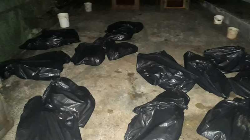 Cachorros mortos estavam em uma casa na zona norte de Londrina — Foto: Guarda Municipal de Londrina/Divulgação