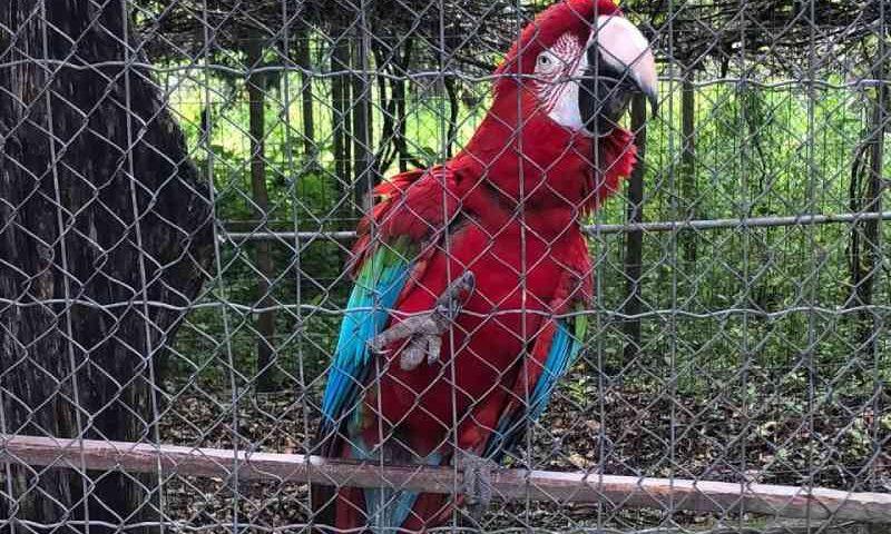 Patrulha Ambiental apreende 9 animais silvestres abandonados no Recreio dos Bandeirantes, RJ