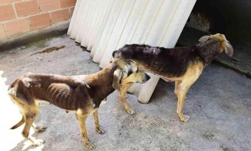 Cachorros que viviam em situação de maus-tratos são resgatados em Resende, RJ