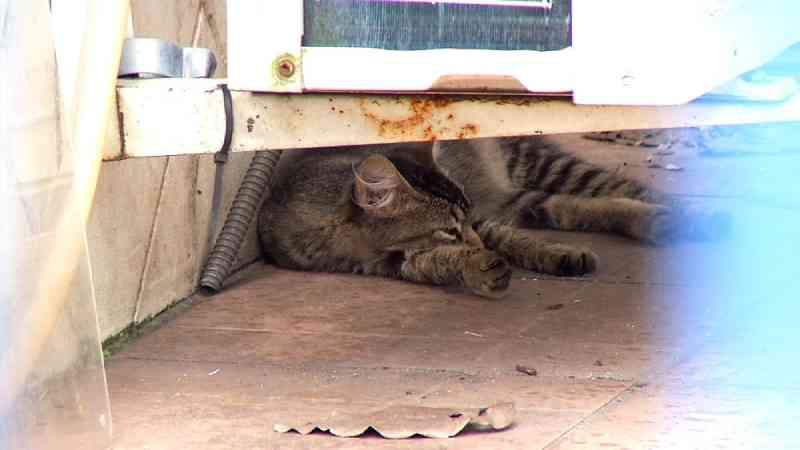 Número de gatos encontrados mortos preocupa ONGs de Resende, RJ
