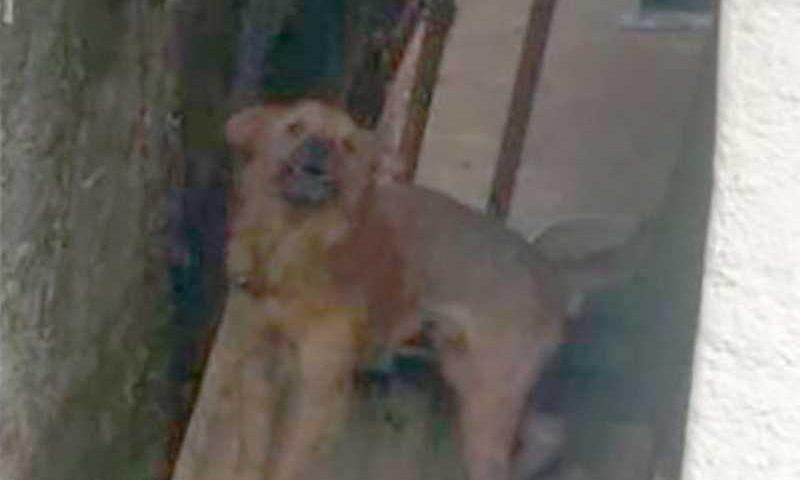 Denúncia revela maus-tratos contra cão em residência no Duarte da Silveira, em Petrópolis, RJ