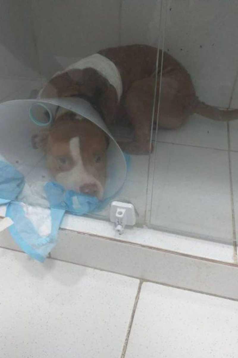 Thor passou três dias internado e precisa fazer uma cirurgia para amputar uma das patas Foto: Reprodução