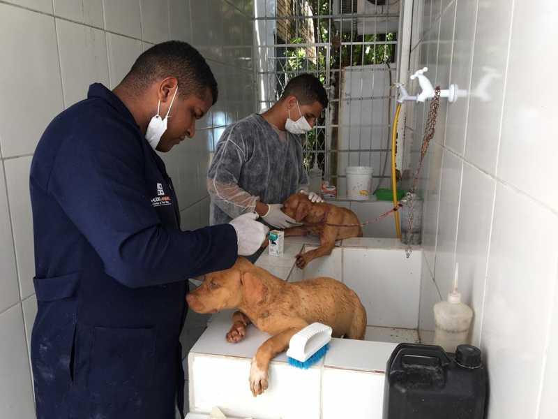 Cachorros recebem atendimento em clínica veterinária em Natal, nesta segunda (27), após serem resgatados — Foto: Quézia Oliveira/Inter TV Cabugi
