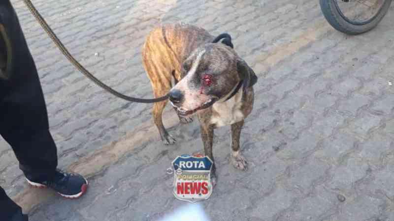 Reportagem aciona a PM após atropelamento de cão em posto de combustível em Vilhena, RO