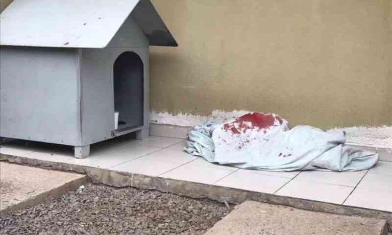Cachorrinha é morta por atirador em Caxias do Sul, RS