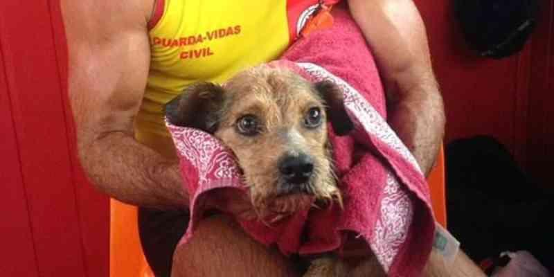 Cão é salvo por guarda-vidas após cair no rio Tramandaí, em Imbé, RS