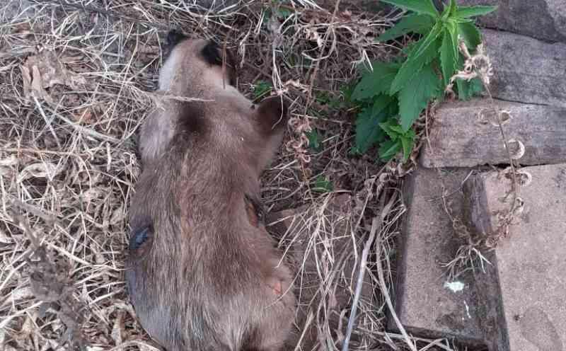 Gato morto a tiros comove moradores e gera indignação