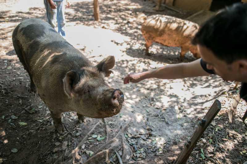 """""""Há um sistema ideológico de exploração que atinge animais humanos e não humanos"""", defende ativista. Foto: Luiza Castro/Sul21"""