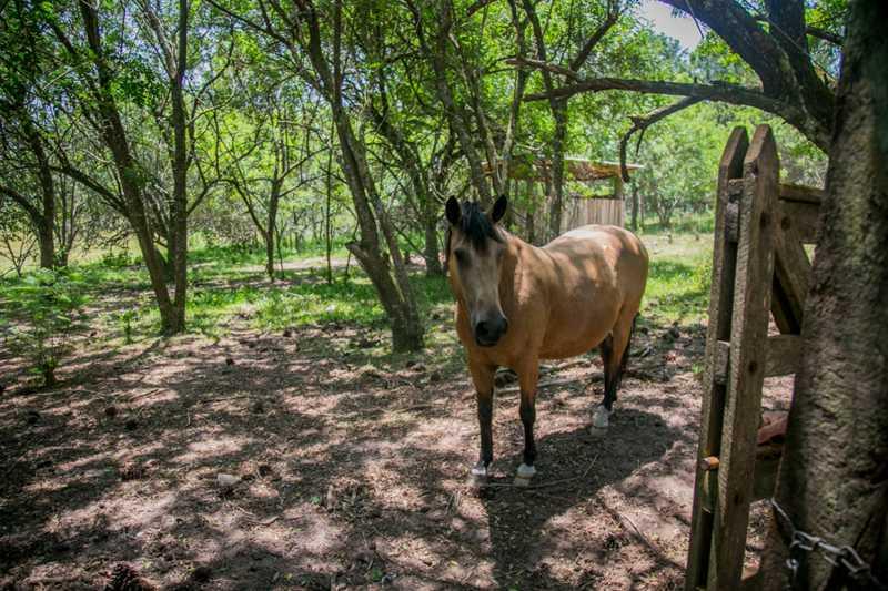 Santuário Voz Animal abriga hoje cerca de 300 animais, entre cães, gatos, aves, porcos, bovinos e equinos. Foto: Luiza Castro/Sul21