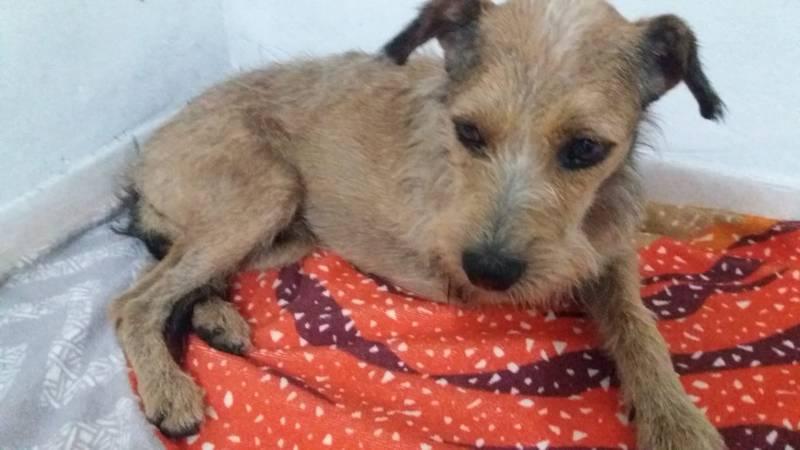 Cão precisou ser resgatado com uma prancha do mar, em Imbé. — Foto: Corpo de Bombeiros Militar do Rio Grande do Sul/Divulgação