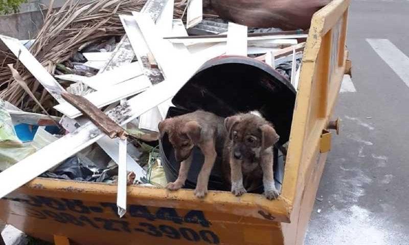 Filhotes foram encontrados e estão sendo acompanhados pela Secretaria de Proteção Animal — Foto: Divulgação / Prefeitura de São Leopoldo