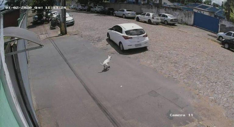 Cachorrinho abandonado está aguardando adoção em São Leopoldo — Foto: Reprodução/Câmera de segurança
