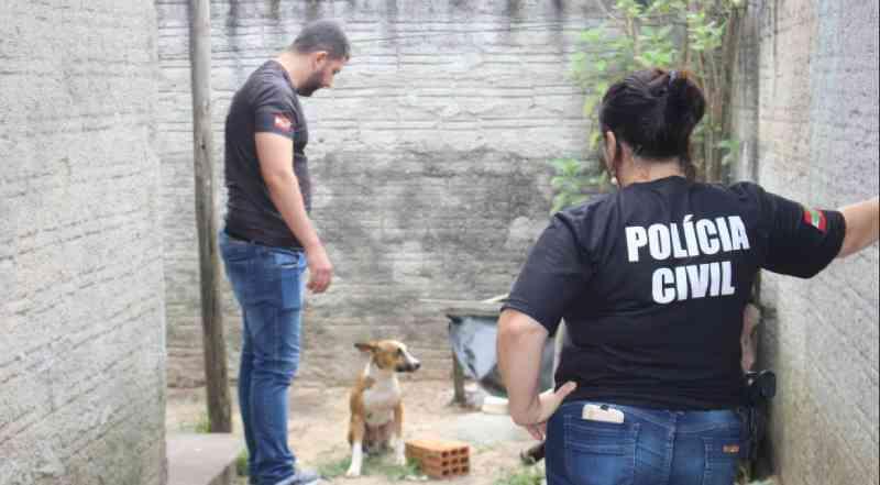 Polícia Civil resgata cachorro que vivia em maus-tratos, em Araranguá, SC