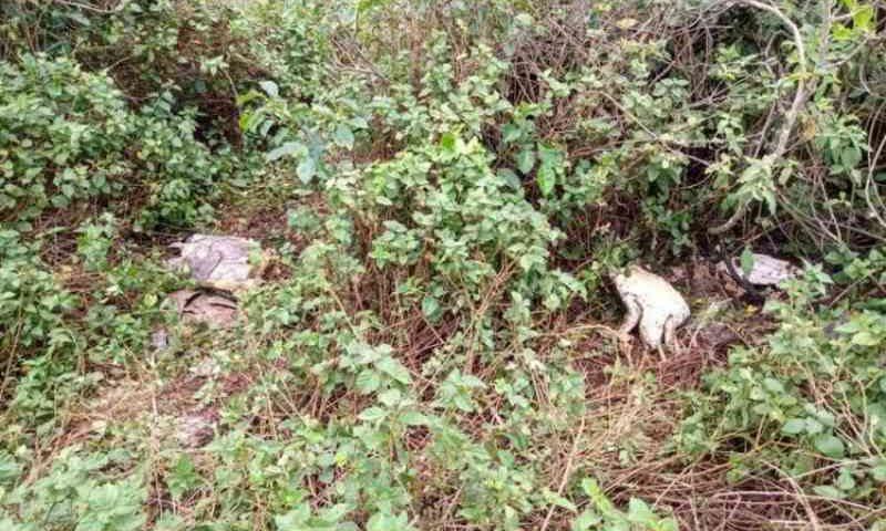 Morte de tartarugas em Barra Velha (SC) pode ter sido causada por redes de pesca irregulares