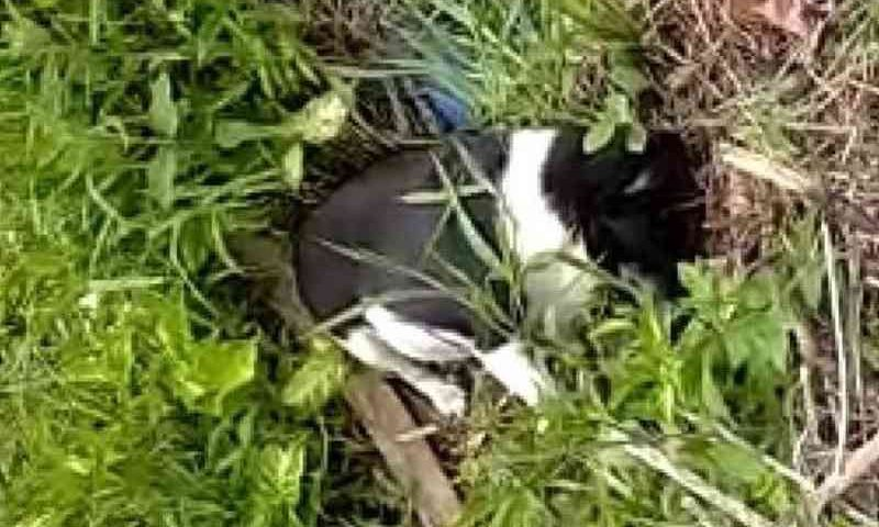 Suspeito é indiciado por envenenar e matar 26 animais em Joinville, SC