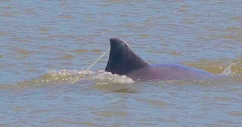 Boto é flagrado preso por anzol nos Molhes da Barra, em Laguna, SC