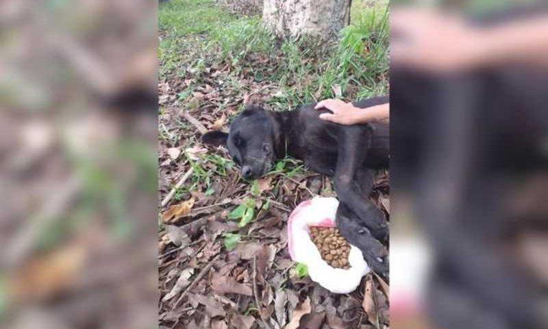 Animal precisa de urgente de resgate