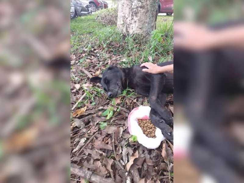Cachorro cego é abandonado às margens da BR-101 em Itapema, SC
