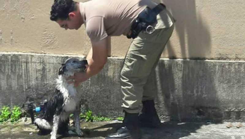 A imagem de um policial dando banho de mangueira em um cachorro que desmaiou na rua por causa do calor viralizou nas redes sociais.