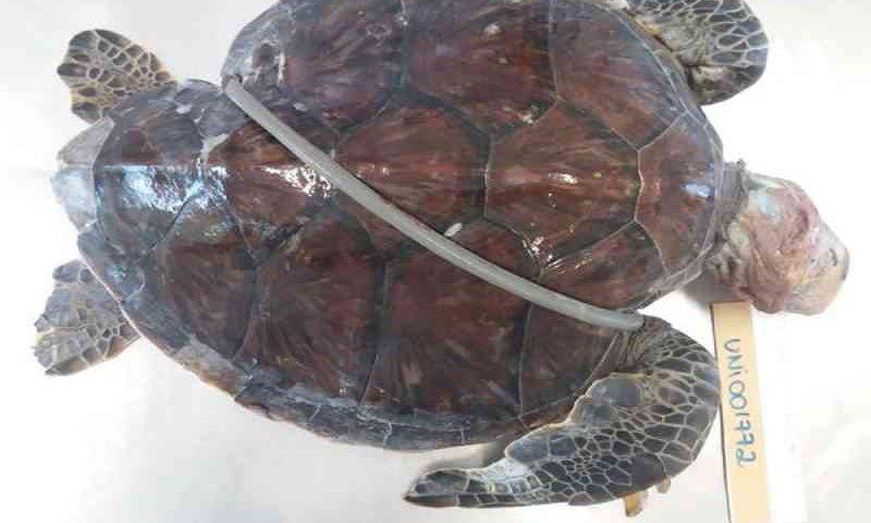 Projeto leva ações educativas para conscientizar crianças sobre morte de animais marinhos em SC