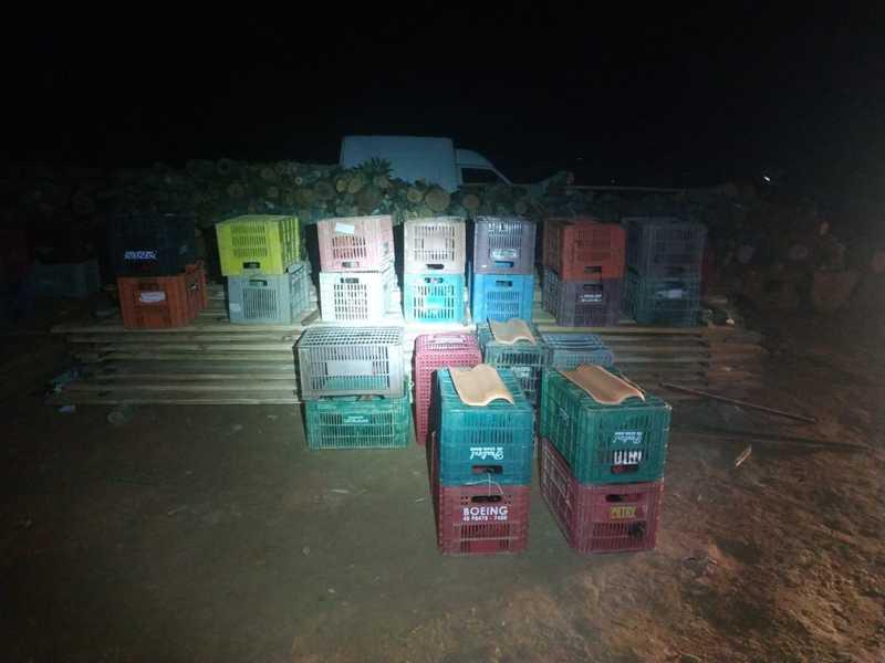 Galos estavam recolhidos em caixas para rinha em São João Batista. — Foto: Divulgação/PMSC