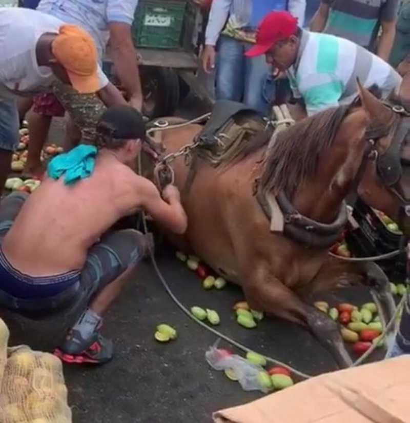 Cavalo é derrubado por excesso de carga. Foto: redes sociais