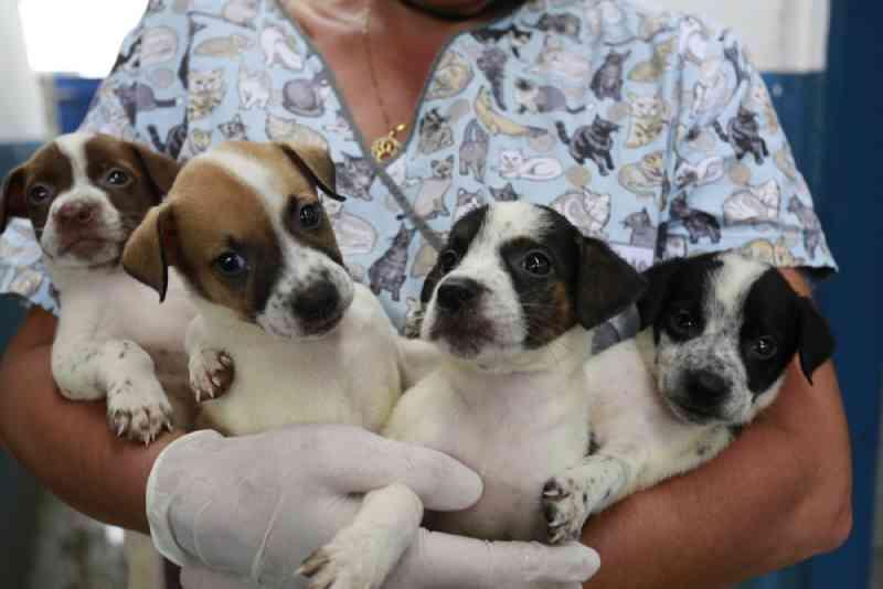 Canil Municipal de Guarujá, SP, tem cerca de 160 animais para adoção