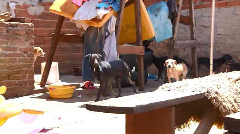 Após denúncia, Polícia Ambiental resgata 13 cachorros com sinais de maus-tratos em casa de Itapira, SP
