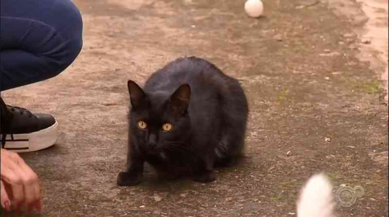 Casos de envenenamento de gatos voltam a preocupar moradores de bairro em Jundiaí, SP