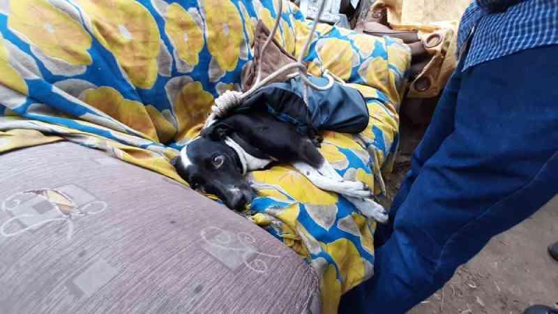 Cachorra é resgatada com vida quase um mês depois de cair em precipício no interior de SP