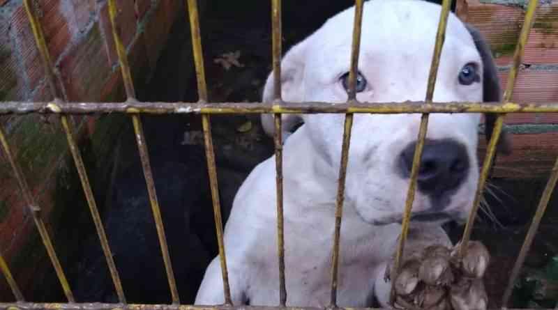 Cães resgatados em canil clandestino de Ribeirão Pires recebem cuidados na UPA Animal de Mauá, SP