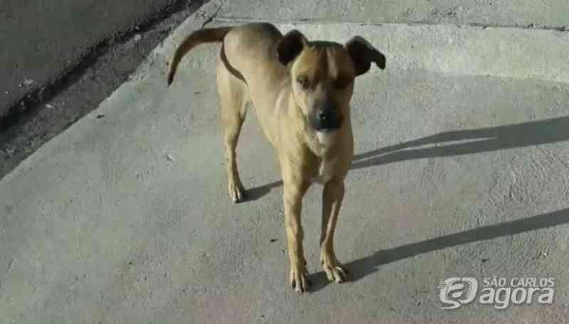 Morte violenta do cachorro Pimpão gera revolta; moradores farão protesto pacífico em São Carlos, SP