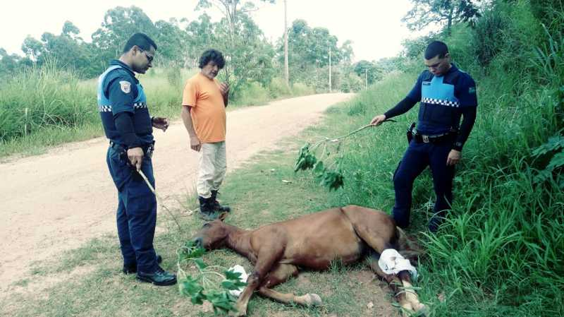 Jundiaí, SP: cavalo encontrado ferido no Caxambu é atendido