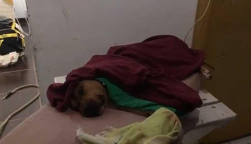 Delegado divulga vídeos inéditos da rinha de cães de Mairiporã, SP