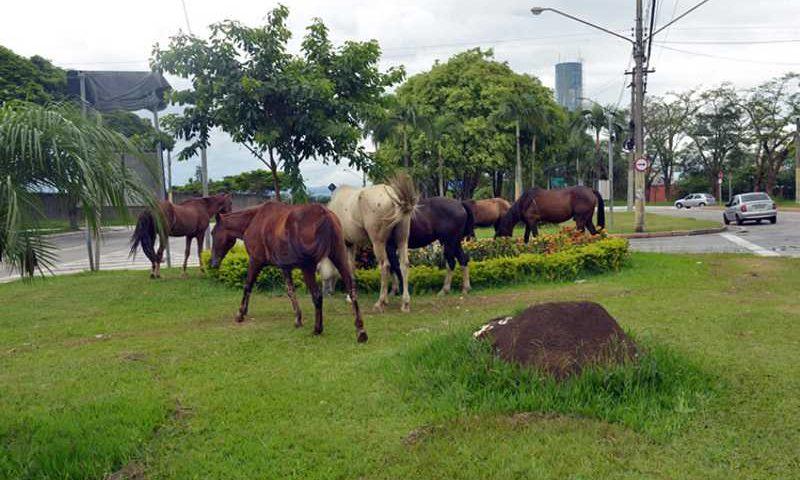 O serviço tem o objetivo de recolher animais soltos ou amarrados em locais públicos. (Foto: Charles de Moura/PMSJC)