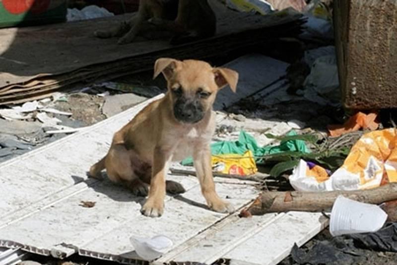 Em 2019, cerca de 900 animais foram recolhidos nas ruas pelo Cepad Barueri (Foto: Divulgação)