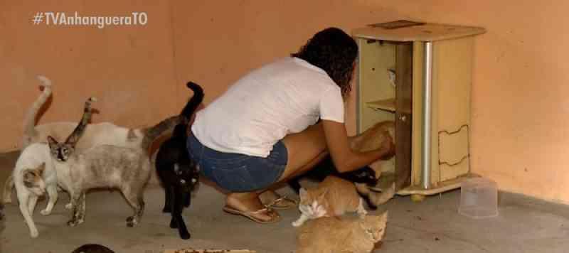 Abrigos ficam lotados por causa do aumento no número de animais abandonados em Palmas, TO