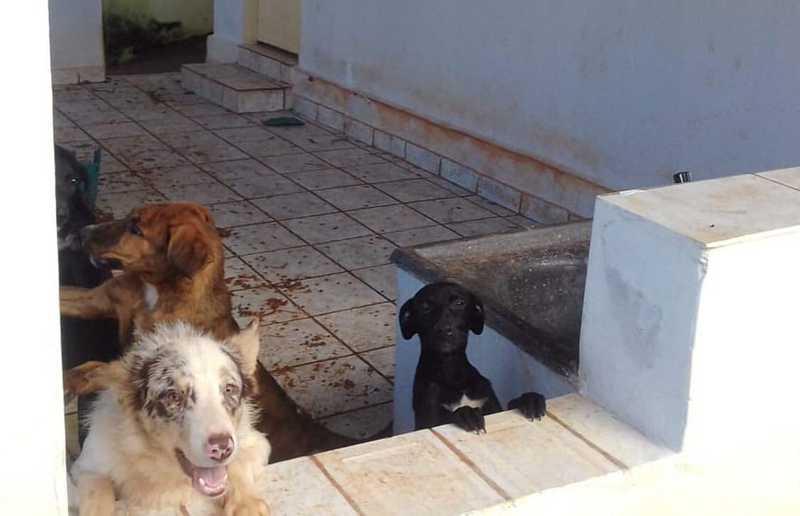 Animais estavam abandonados em casa cheia de fezes — Foto: Reprodução/Instagram