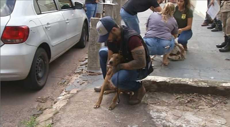 Animais foram resgatados neste sábado — Foto: Reprodução/TV Anhanguera