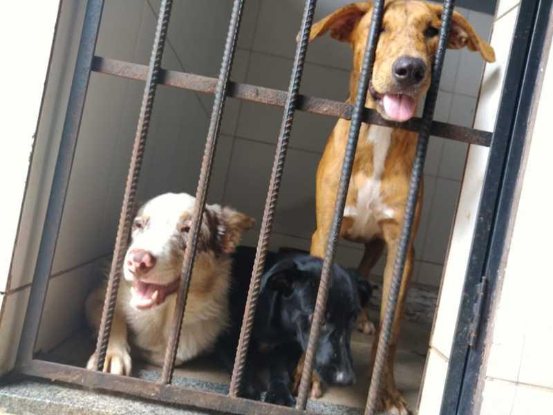 Cães resgatados de casa em situação precária começam a ir para lares temporários em Araguaína, TO