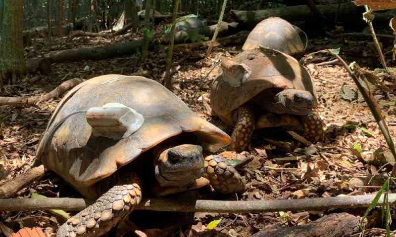 Com fechamento de zoológico da UFMT, 28 jabutis são levados para o Parque da Tijuca no RJ