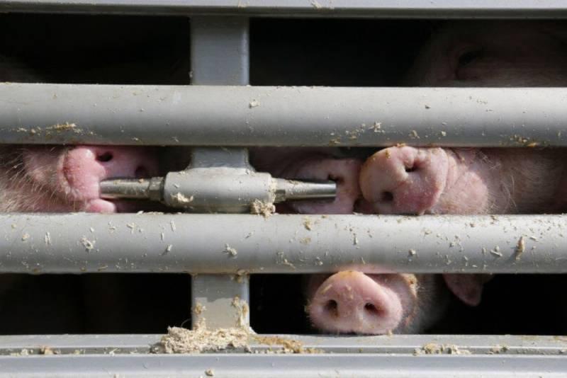 Fotógrafo polonês capta os segredos da indústria animal — porque 'não temos o direito de ser tão cruéis'