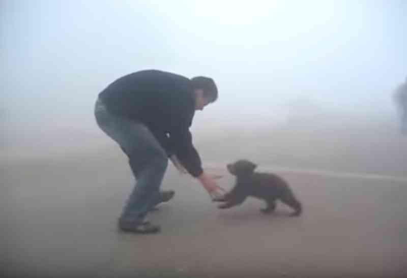 Um filhote de urso não para de abraçar um homem que o salvou de um incêndio no bosque