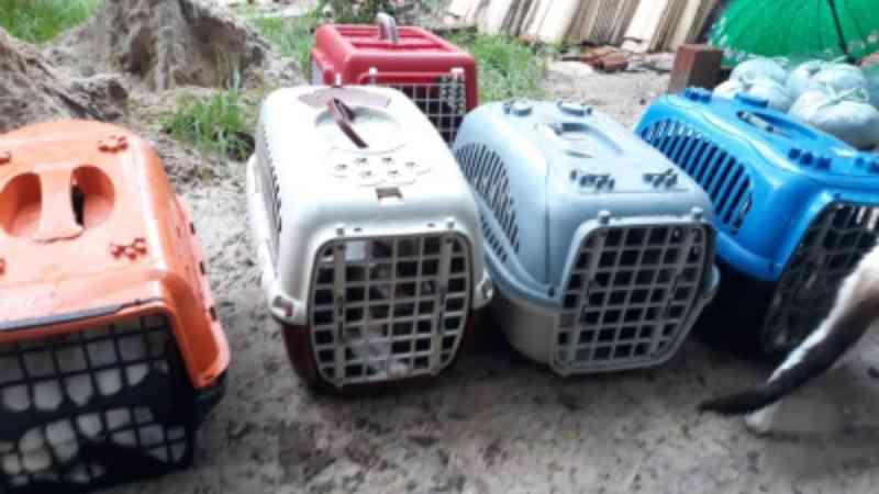 Mulher encontra 20 gatos mortos ao lado de escola no bairro Autran Nunes, em Fortaleza, CE