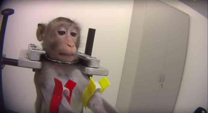 Laboratório horrível exposto por torturar macacos, cães e gatos teve sua licença revogada!