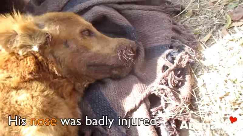 Ninguém pensou que o cachorro atingido por um trem sobreviveria, mas essas pessoas tentaram mesmo assim