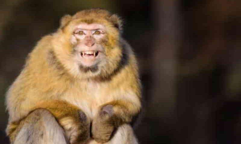 Os turistas incomodam os macacos