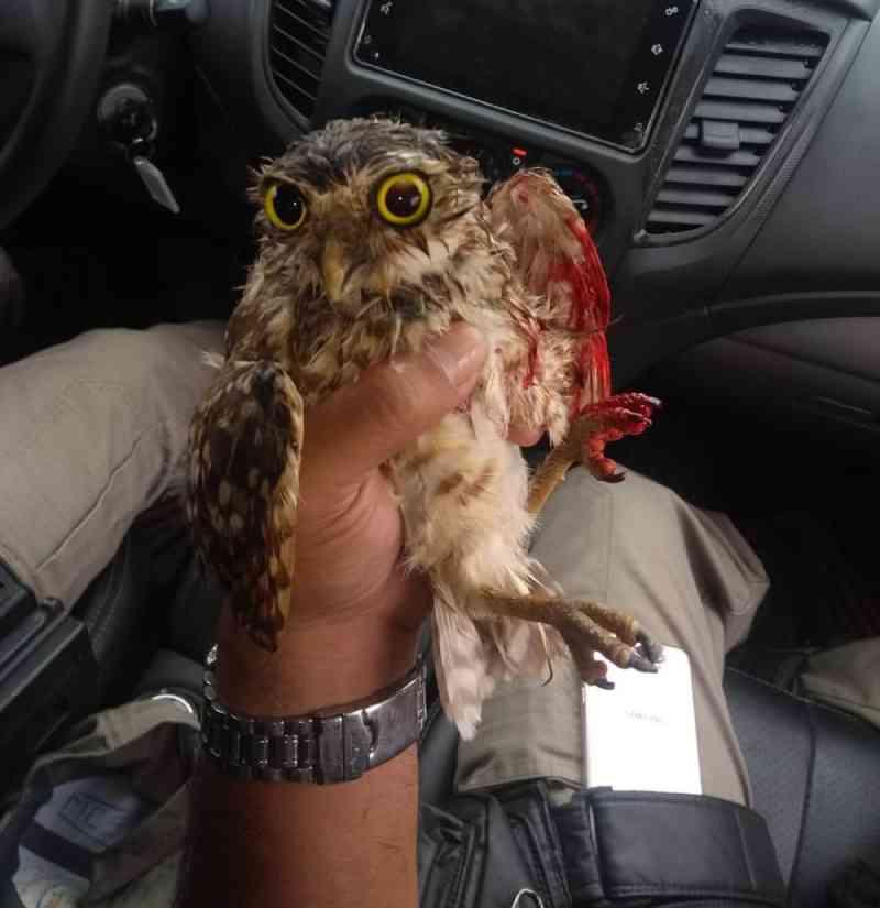 Coruja é achada amarrada de cabeça pra baixo com sinais de tortura em grade de escola no AC
