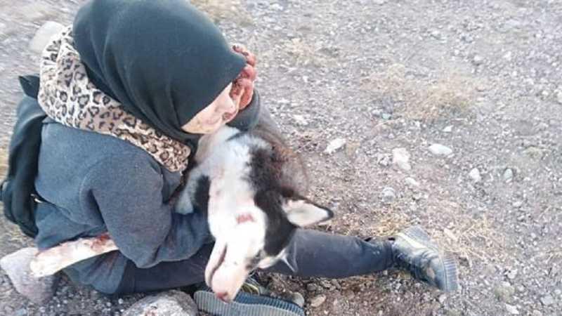 'Eles mataram minha husky e disseram que mulheres não podiam ter cachorros'